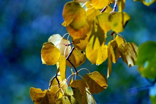 زرد شدن گیاهان آپارتماتی