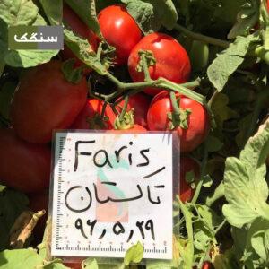 بذر گوجه فاریسF1