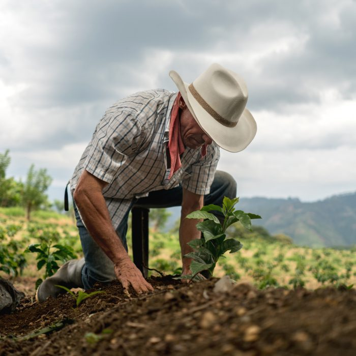 Latin American man sowing the land at a farm - agriculture concepts